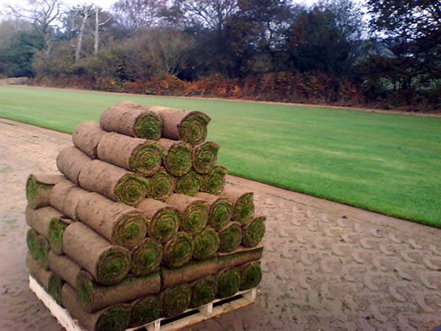 Photo of a pallet of seeded turf.